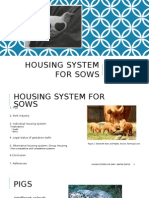 Housing System for Sows