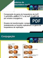 Gama de hospedeiros de replicação de plasmídeos IncP1 intactos