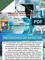 Mecanismos de Natacion