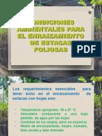 Condiciones Ambientales Para El Enraizamiento de Estacas Foliosas