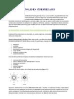 Patrones Funcionales en Enfermedades Pulmonares