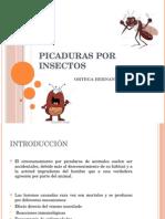 Picaduras Por Insectos