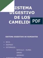 Digestion Camelidos