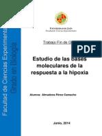 Almudena_Bases Moleculares de Respuesta Ala Hipoxia