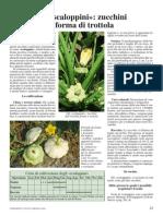 Coltivazione degli zucchini