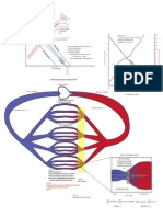 Vascular Function Curve