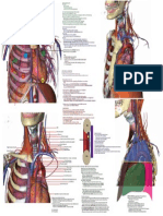 Thoracic Anatomy