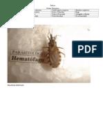 Prática de Entomologia