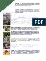 Animales Imprimir