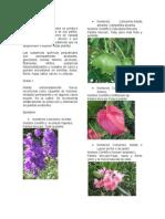 Plantas-tóxicas.docx