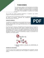 Funciones de carbohidratos.docx