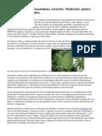 Annona Muricata, Guanabana, Graviola. Medicinal. quince Semillas Para Siembra.