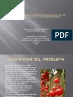 Implementacion de Buenas Practicas Agronomicas Del Cultivo De