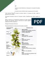 Reguladores hormonales en hortalizas