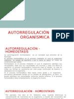 Autorregulación-organísmica