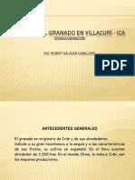 Cultivo Granado Villacuri