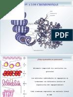 clase de ADN y ARN. 11