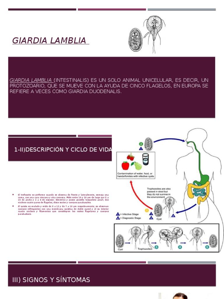 antigeno de giardia lamblia