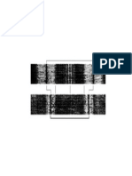 Blank Sarcomere Diagram to Label