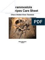 Chaco Golden Knee Grammostola Pulchripes Care Sheet by Albert Abarquez