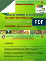 Manejo de plantones en vivero forestal