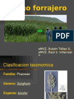 7256853-Sorgo-forrajero.pdf