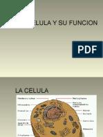 la-celula-y-su-funcion1.ppt