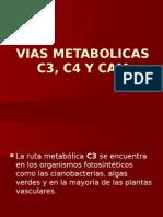 Vias Metabolicas C3, C4, CAM