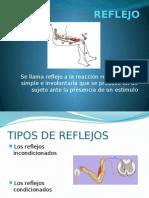 Exposicion Anatomia Reflejos