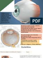 oftalmologia-esclera