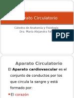 Sistema CirculatorioSistema CirculatorioSistema CirculatorioSistema Circulatorio
