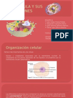 La Célula y Sus Funciones