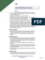 Western Blotting Protocol
