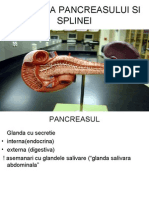 anatomia pancreasului si splinei