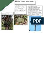 Plantas Uteis a Sobrevivencia No Pantanal