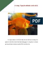 7 bệnh ở cá vàng
