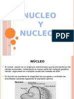 Nucleo y Nucleolo