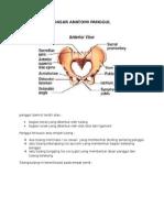 Resume Anatomi Panggul
