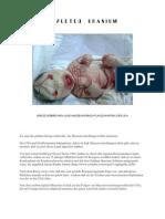 DEPLETED URANIUM - Die Massenvernichtungswaffen der USA