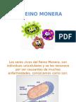 CLASE VIRTUAL EL REINO MONERA.pptx