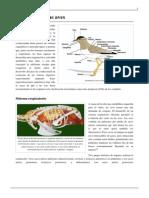 Anatomía de Las Aves