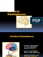 Neuroanatomy Cerebral Hemispheres
