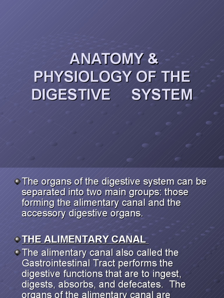 Anatomy & Physiology of the Digestive System-powerpoint | Human ...