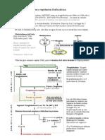 Fisiologia - Endocrino II - Tiroides y Regulacion Fosfocalcica