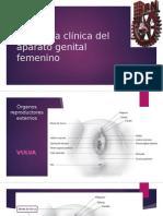 Anatomía Clínica Del Aparato Genital Femenino