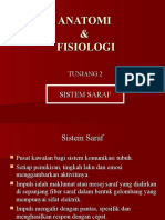 Sistem Saraf Tingkatan 4