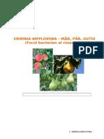 Epidemiologie ERWINIA scd