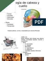Anatomia Intraoral
