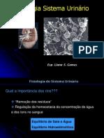 Fisiologia Sistema Urinário