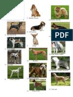 especialidad de perros.docx